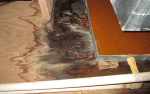 Mold Damage in Mooresville, North Carolina