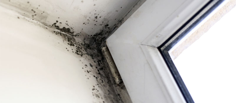 Mold Removal in Mooresville, North Carolina