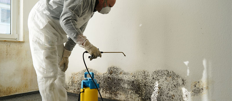 Mold Damage Remediation in Mooresville, North Carolina