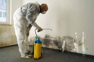 Mold Damage Repair in Huntersville, NC